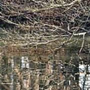 Mirroring Waters Art Print