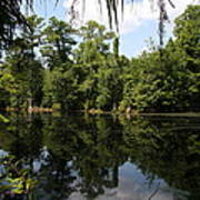 Mirrow Lake - Magnolia Gardens Art Print