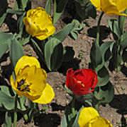 Misplaced Tulip   #0934 Art Print