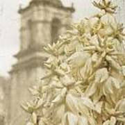 Mission San Jose And Blooming Yucca Art Print