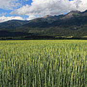 Mission Valley Wheat Art Print