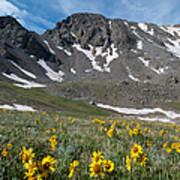 Missouri Mountain And Wildflower Landscape Art Print