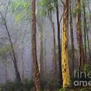 Mist in forest Art Print