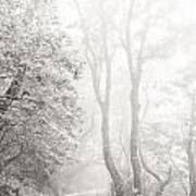 Mist In Madeira Art Print
