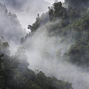 Mist in trees at Franz Josef glacier Art Print