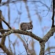 Mister Squirrel Art Print