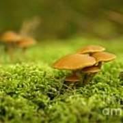Mistery Mushrooms Art Print