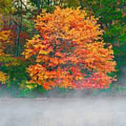 Misty Fall Tree Art Print