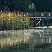 Misty Pond Art Print