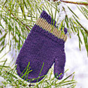 Mitten In Snowy Pine Tree Art Print