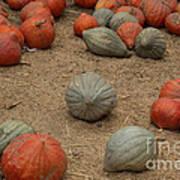 Mixed Pumpkins Art Print