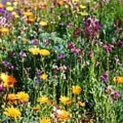 Mixed Wildflowers Art Print