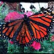 Mnarch Butterfly Art Print