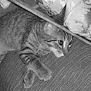 Model Kitten Art Print