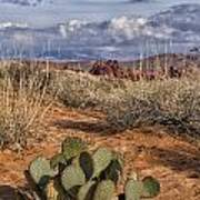 Mojave Desert Cactus Art Print