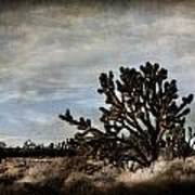 Mojave Desert Joshua Tree In Cima Art Print