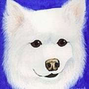 Molly The American Eskimo Dog Art Print