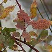 Molting Leaves  Art Print