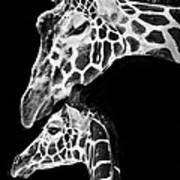 Mom And Baby Giraffe  Art Print by Adam Romanowicz
