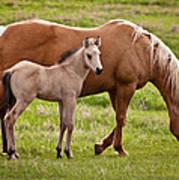 Mom And Foal 2 Art Print