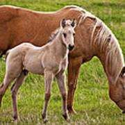 Mom And Foal Art Print