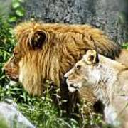 Mom And Pop Lion Art Print