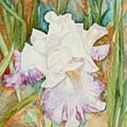 Mom's Iris Art Print