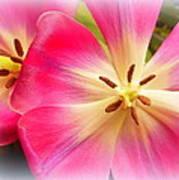 Moms Tulips 1 Art Print