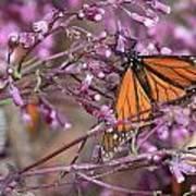 Monarch 1 Art Print