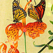 Monarch Butterflies Art Print