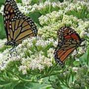 Monarch Butterfly 57 Art Print