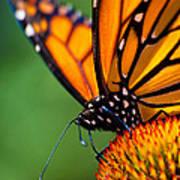 Monarch Butterfly Headshot Art Print
