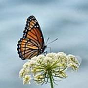 Monarch Butterfly On River Art Print