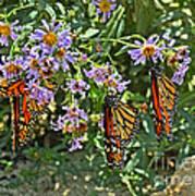 Monarch Butterfly Trio Art Print