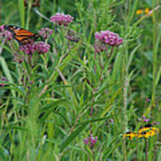 Monarch In The Wildflowers Art Print