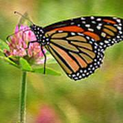 Monarch On Clover Art Print
