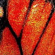 Monarch Wing Art Print