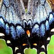 Monarchs Blue Glow Art Print by Kim Galluzzo Wozniak
