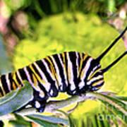Monarch's Caterpillar.nz Art Print