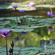 Monet's Waterlily Pond Number Two Art Print