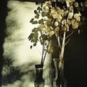 Money Plants Really Do Cast Shadows Art Print by Guy Ricketts