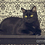 Mongo The Robust Cat Art Print