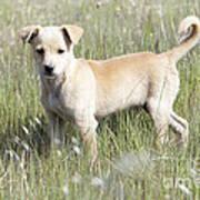 Mongrel Dog Puppy Art Print