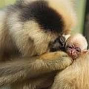 Monkey Mother Art Print