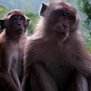 Monkey's Attention Art Print