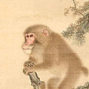 Monkeys Art Print
