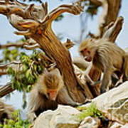 Monkeys On Mountain Art Print