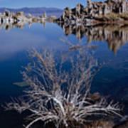 Mono Lake Salt Bush Art Print