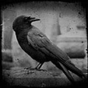 Monochrome Crow Art Print