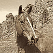 Montana Horse Portrait In Sepia Art Print